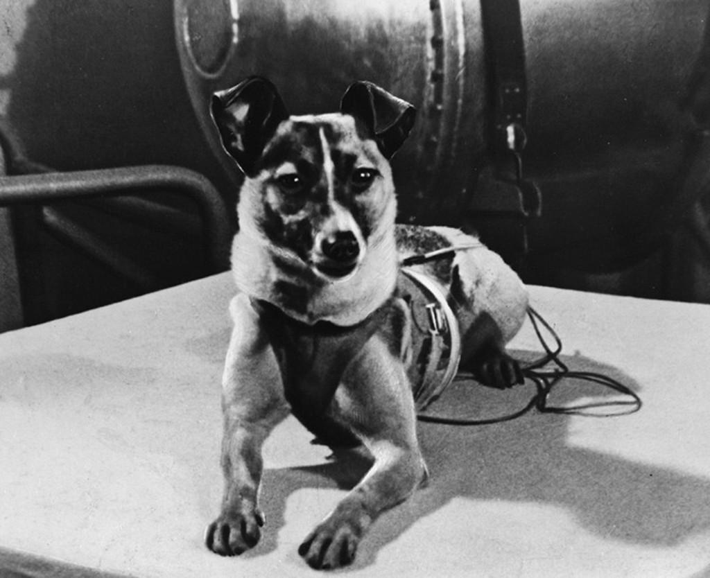 60 лет назад собачка Лайка первой вышла наорбиту Земли