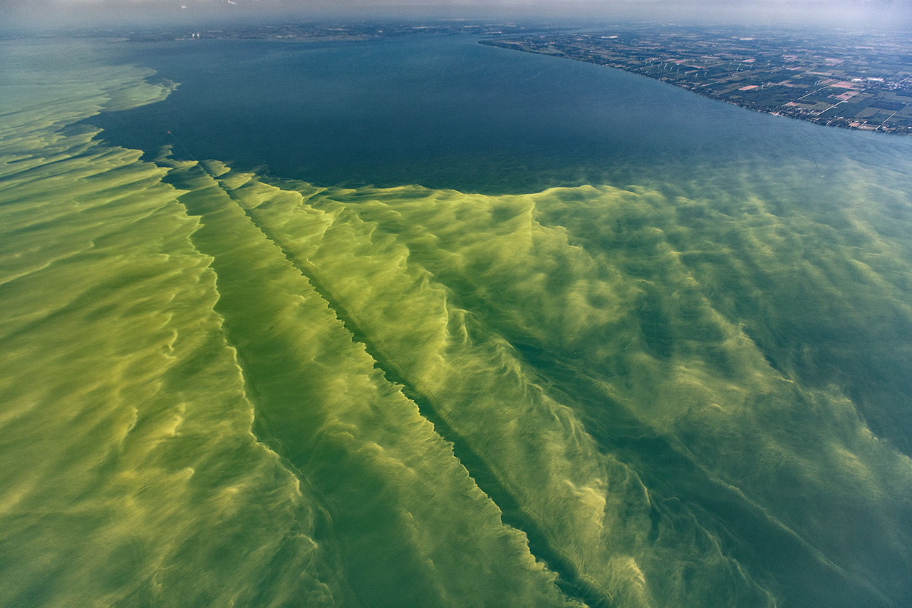 Вчені розкрили подробиці існування одноклітинних організмів в океані стародавньої Землі. ФОТО